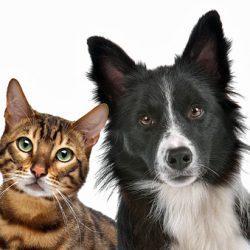 Reisverzekering met dekking voor je huisdier